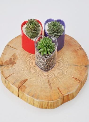 Kütük Supla/Teraryum Tabla-Kaytus Design